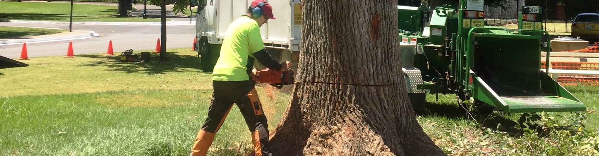 Allout Tree Removals