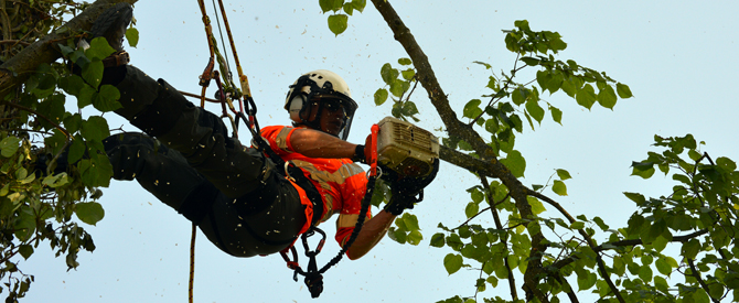Melbourne Tree Services