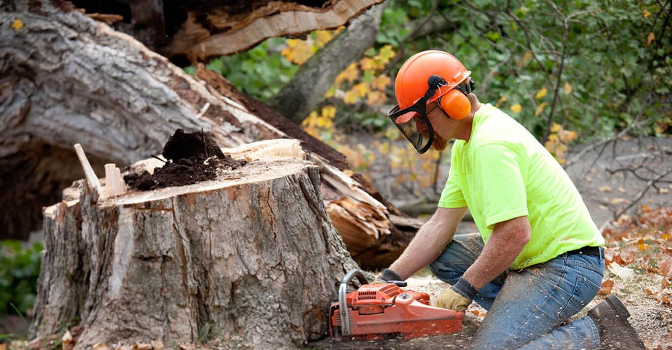Types of Service You Can Expect From a Reputed Tree Removal ...