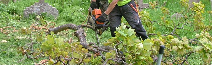 About trees removal services