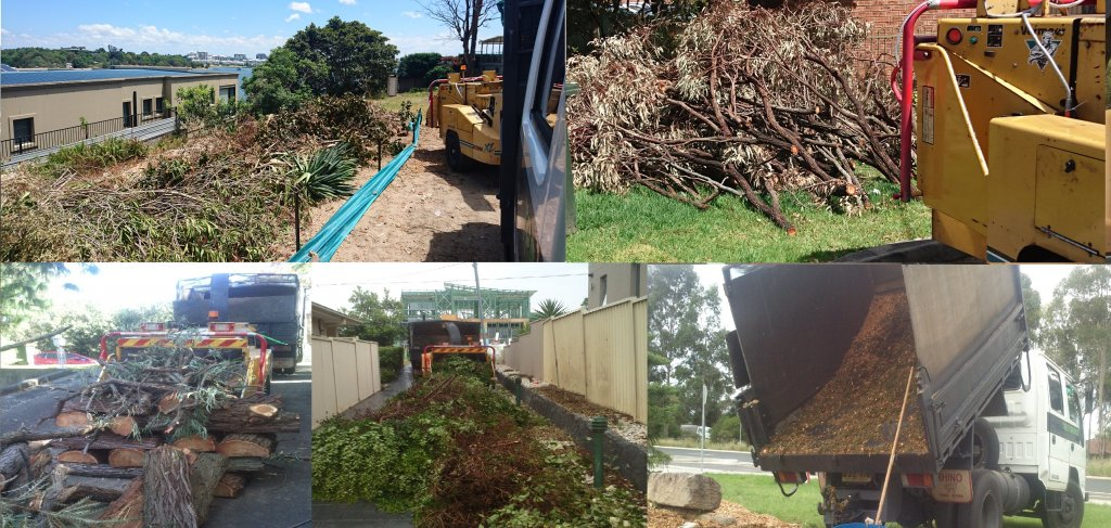 about tree removal services