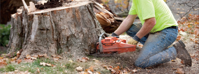 Adelaide Experts tree removals
