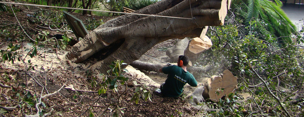 professional Tree Removal Adelaide service