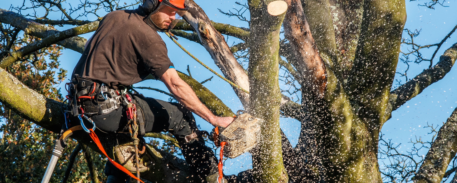 Tree Removal Adelaide Hills