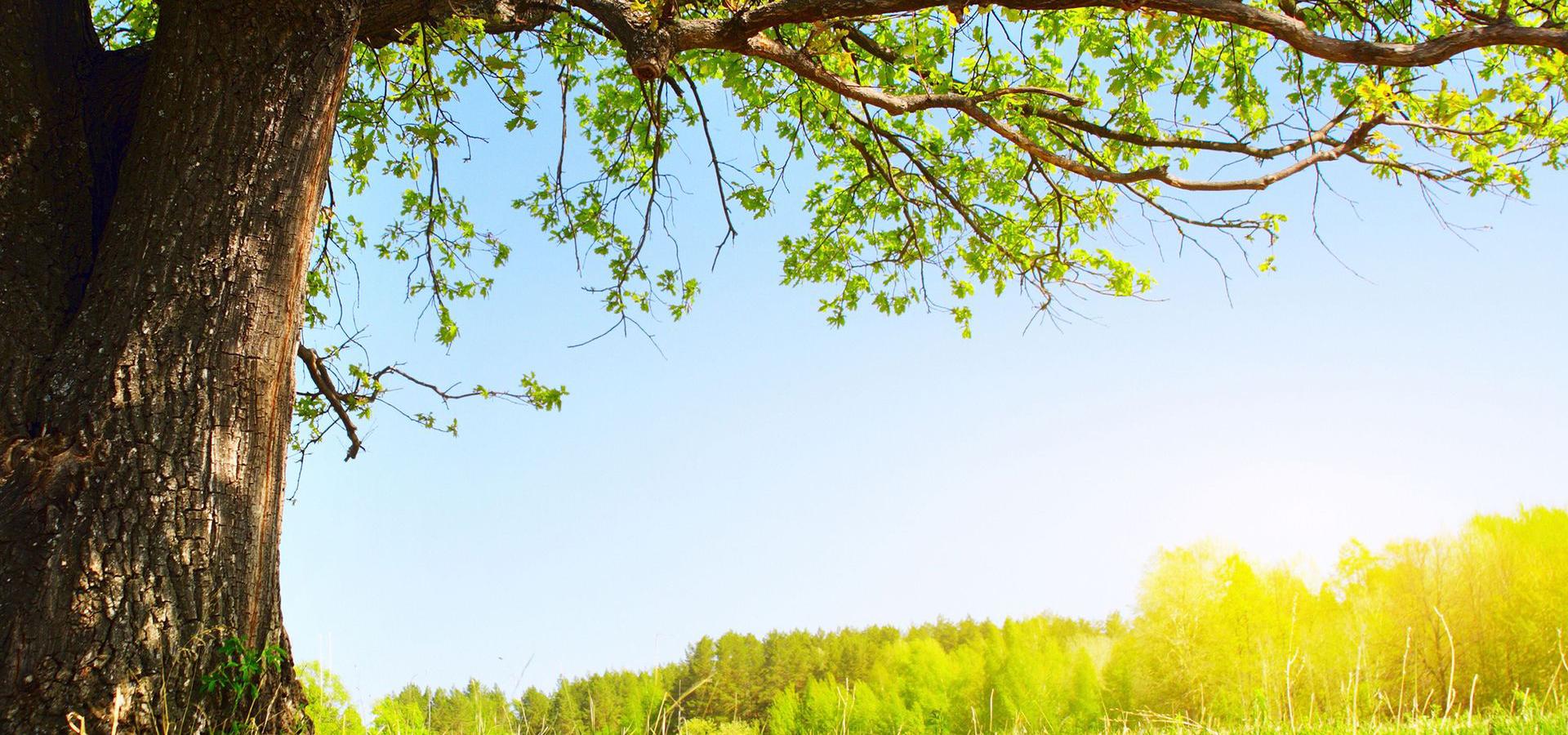 Tree Pruning Adelaide