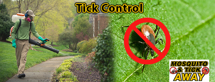 4 Super-Effective Ideas To Control Mosquitoes In Your Backyard